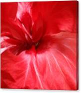 Red Passion 2 Canvas Print