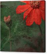 Red Passion... Canvas Print