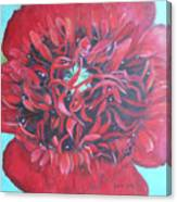 Red  Peonie Canvas Print