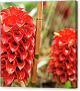 Red Pineapple Ginger Plant Canvas Print