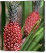 Red Pineapples Canvas Print