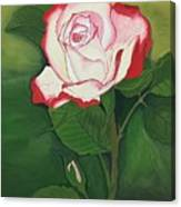 Red-pink Rose Canvas Print