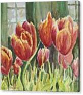 Red Pink Tulips Canvas Print