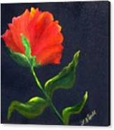 Red Poppie Canvas Print