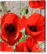 Red Poppies 2 Canvas Print