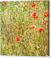 Red Poppies And Wild Flowers Canvas Print