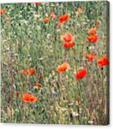 Red Poppies In A Summer Sun Canvas Print