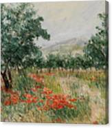 Red Poppies In The Olive Garden Canvas Print