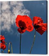 Red Poppies On Blue Sky Canvas Print