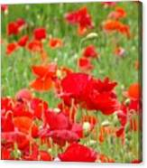 Red Poppy Flowers Meadow Art Prints Poppies Baslee Troutman Canvas Print