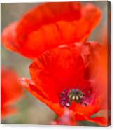 Red Poppy For Remembrance Canvas Print