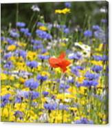 One Red Poppy Amongst The Wildflowers Canvas Print