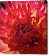 Red Purple Dahlia Flower Summer Dahlia Garden Baslee Troutman Canvas Print