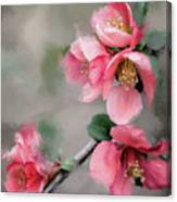 Red Quince Canvas Print