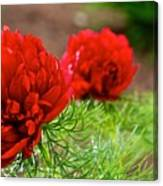 Red Remembrance Canvas Print