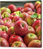 Red Ripe Apples Canvas Print