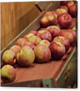 Red Ripe Macintosh Apples Canvas Print