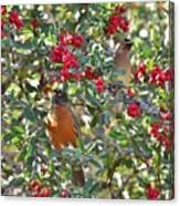 Red Robin And Cedar Waxwing 1 Canvas Print