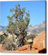 Red Rock Canyon Nv 3 Canvas Print
