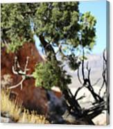 Red Rock Canyon Nv 5 Canvas Print