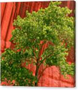 Red Rock Green Tree Canvas Print