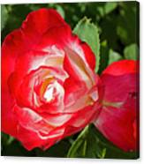 Red Rose And A Sidecar At Pilgrim Place In Claremont-california Canvas Print