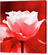 Red Rose Beauty Canvas Print