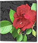 Red Rose For My Lady Canvas Print