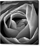 Red Rose In Infrared Canvas Print