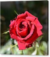 Red Rose Landscape Canvas Print
