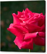Red Rose Profile Canvas Print