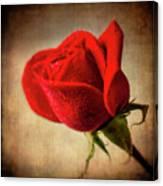 Red Rose Romance Canvas Print