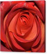 Red Rose Up Close Canvas Print