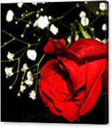 Red Rose With Baby Breath Canvas Print