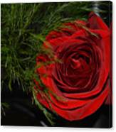 Red Rose With Garnish And Black Velvet Canvas Print