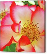 Red Roses White Yellow Rose Flower Floral Art Print Baslee Troutman Canvas Print