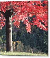 Red Shade Tree Canvas Print