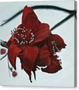 Red Silk Cotton Flower Canvas Print
