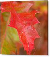 Red Silk Canvas Print
