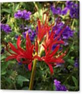 Red Spider Lily Canvas Print