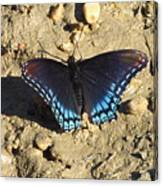 Red Spotted Purple Astyanax Canvas Print