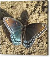 Red-spotted Purple Butterfly Canvas Print