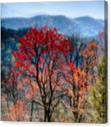 Red Spring Canvas Print