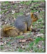 Fox Squirrel 2 Canvas Print