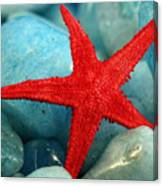 Red Starfish Canvas Print