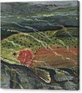 Red Steelhead Canvas Print