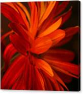 Red Sunflower 1 Canvas Print