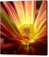 Red Sunflower 3 Canvas Print