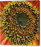 Red Sunflower Macro Canvas Print