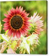 Red Sunflower, Provence, France Canvas Print